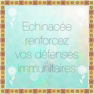 Renforcez vos défenses immunitaires avec l'échinacea