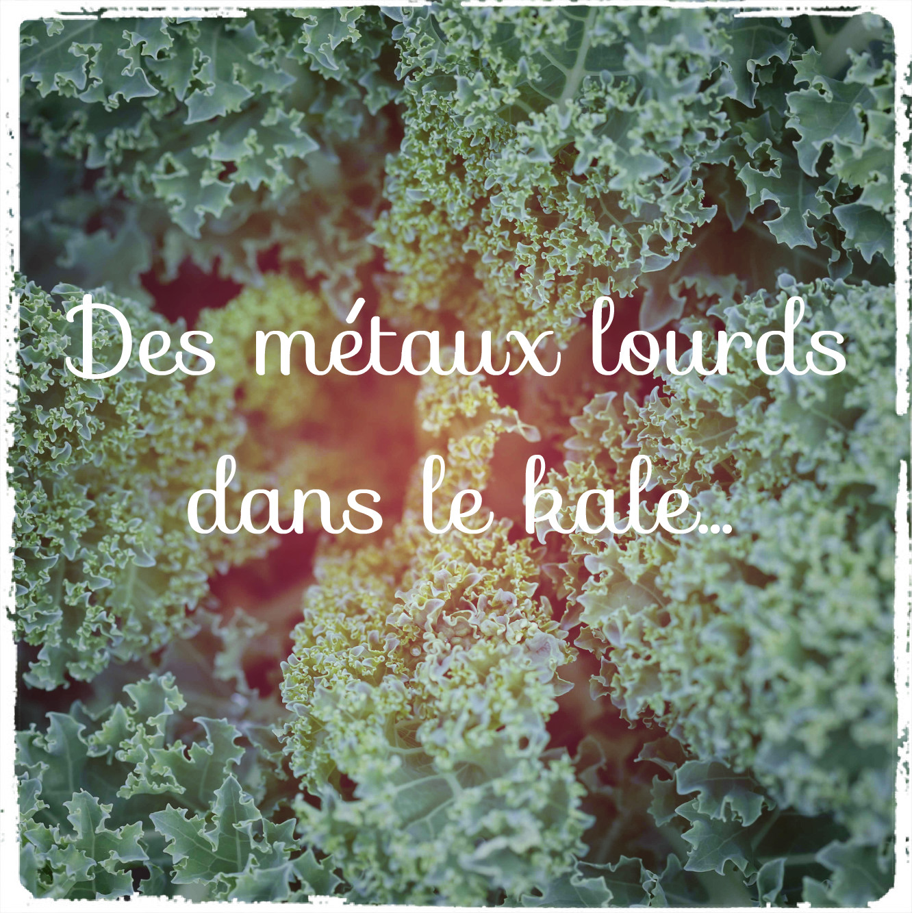 Le kale, ce chou empoisonné…