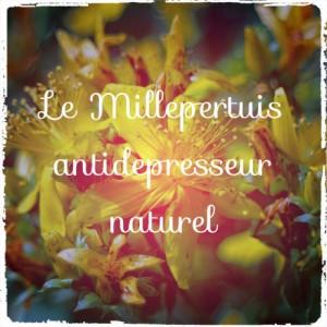 Le millepertuis: un antidépresseur aux effets secondaires…