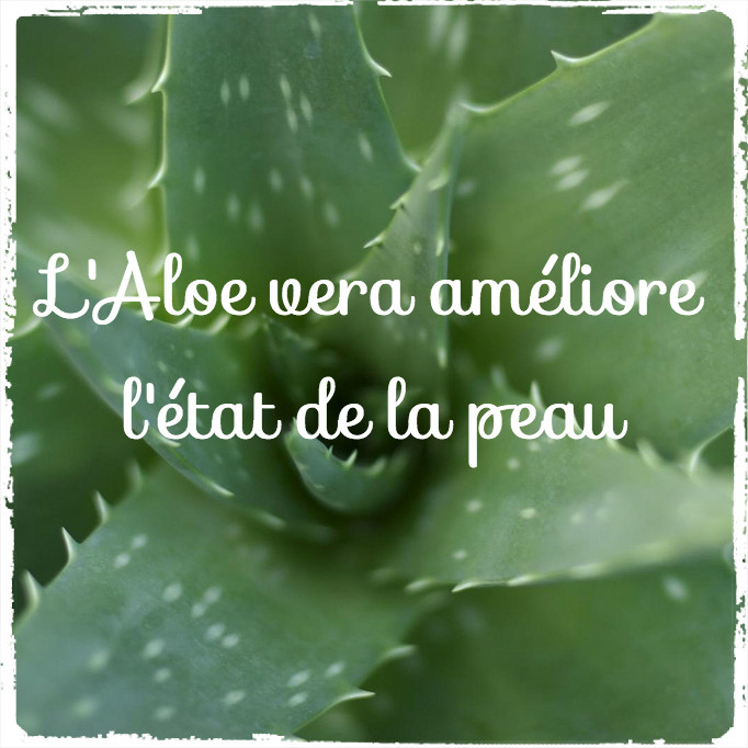 L'aloe vera : un anti-âge naturel
