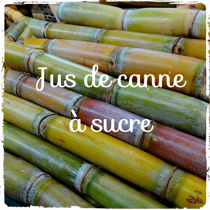 canne a sucre