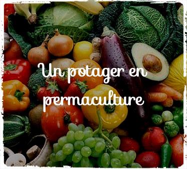 Optimisez votre potager en adoptant la permaculture