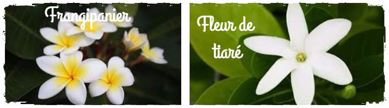 omparaison fleurs de tiare frangipanier